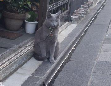 超かわいい♡ねこ女将がいる旅館!京都と猫が好きなら泊まるしかにゃい♡映える京都タワー♡