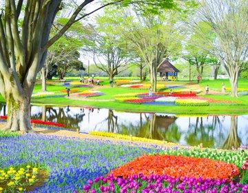 東京都内のチューリップの絶景!春のお出かけにおすすめな国営昭和記念公園◎