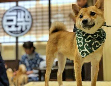 福岡初『豆柴カフェ』にキュン死♡スパよりも効果大⁈780円で極上の癒しを体験‼︎