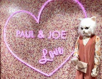 猫好きの方♡美容好きの方♡必見‼︎入場無料の猫カフェが期間限定で表参道に登場ー!