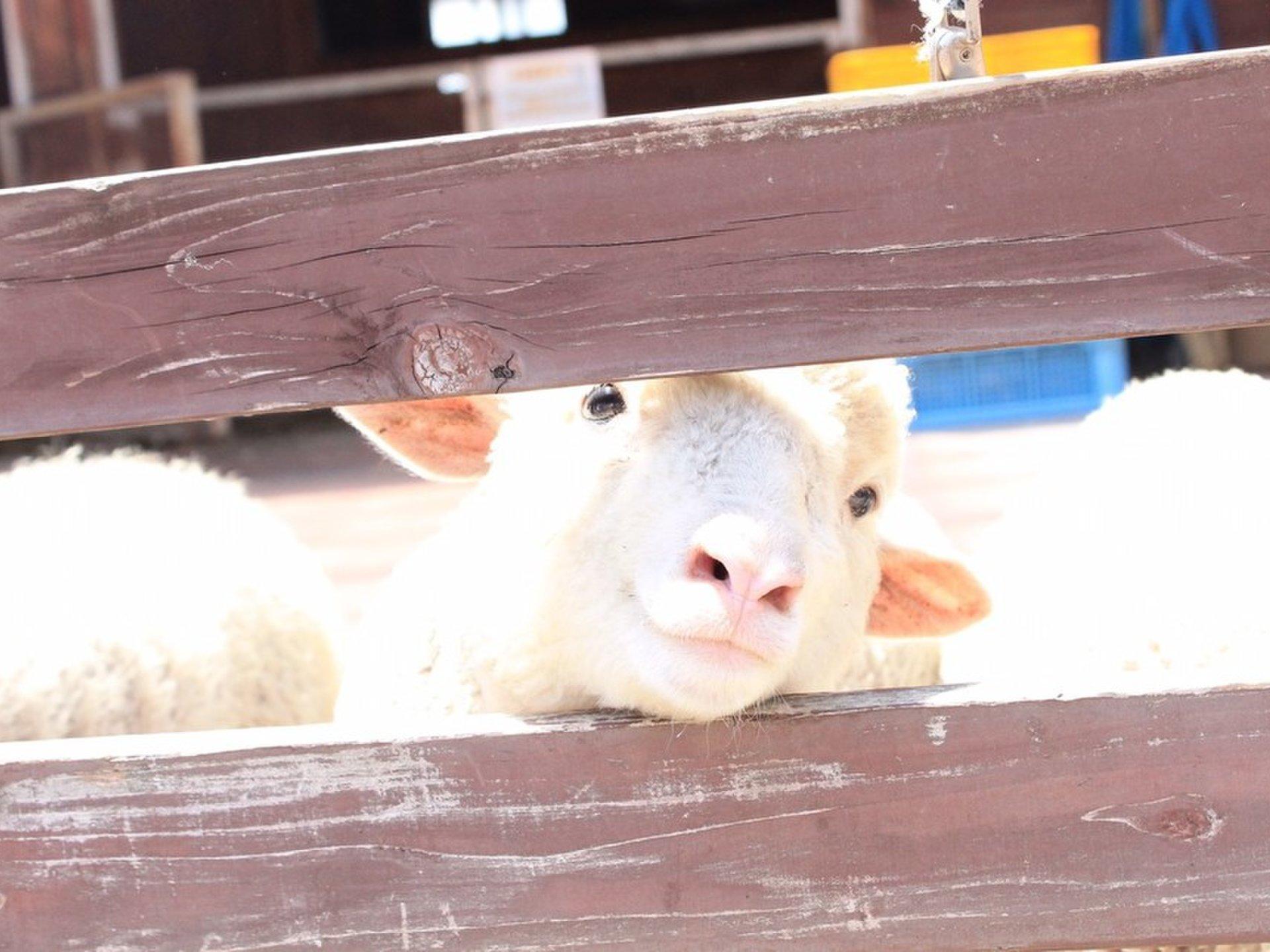 熊本県民おすすめ!赤ちゃんと癒しの熊本温泉旅行♪キッズ歓迎宿&グルメ観光モデルコースをご紹介