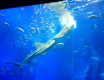 """【世界最大級!】海の生き物たちに触れ合える""""沖縄美ら海水族館""""完全ガイド!"""