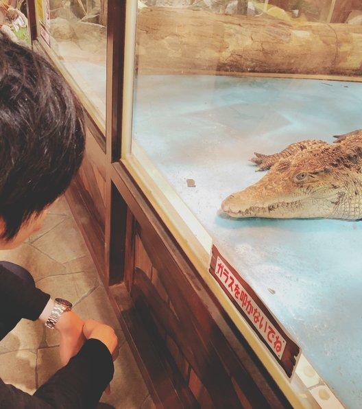 【閉園】めっちゃさわれる動物園