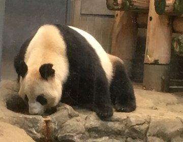 気軽にふらっと立ち寄れる駅近の動物園。上野動物園で家族デート。