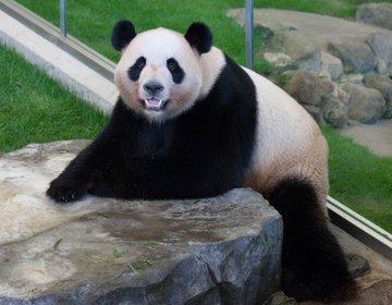 【動物園・水族館・遊園地が一度に楽しめる】和歌山県・南紀白浜 アドベンチャーワールドを遊びつくそう!