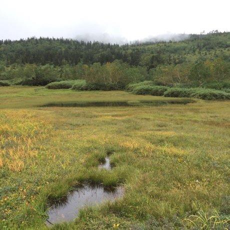 栂池自然園