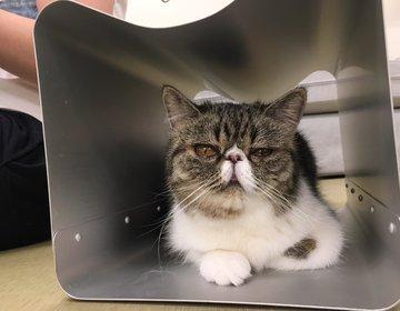 【猫好き必見!】梅田からアクセス抜群!仕事終わりに猫に触れられる全面畳の隠れ猫カフェ!