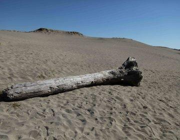 【浜松ドライブ】うなぎパイファクトリー見て、砂丘めぐり、ご当地グルメ三昧!浜松餃子、うなぎ、遠州焼き