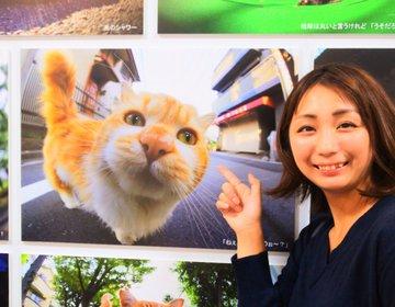 """かわいい猫が大集合♡期間限定 猫好き待望の""""ねこ休み展""""が1年半ぶりにルクア大阪で開催中!"""