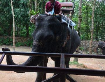 タイ・プーケットで象に乗るゾウ!!サイアムサファリ