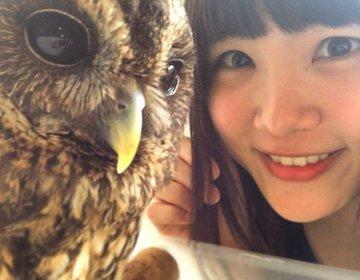 頭をなでなで!フクロウ・ハヤブサに癒される「名古屋の動物カフェ」で至福の一時♡