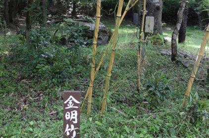 医王山 八王寺 (竹寺)