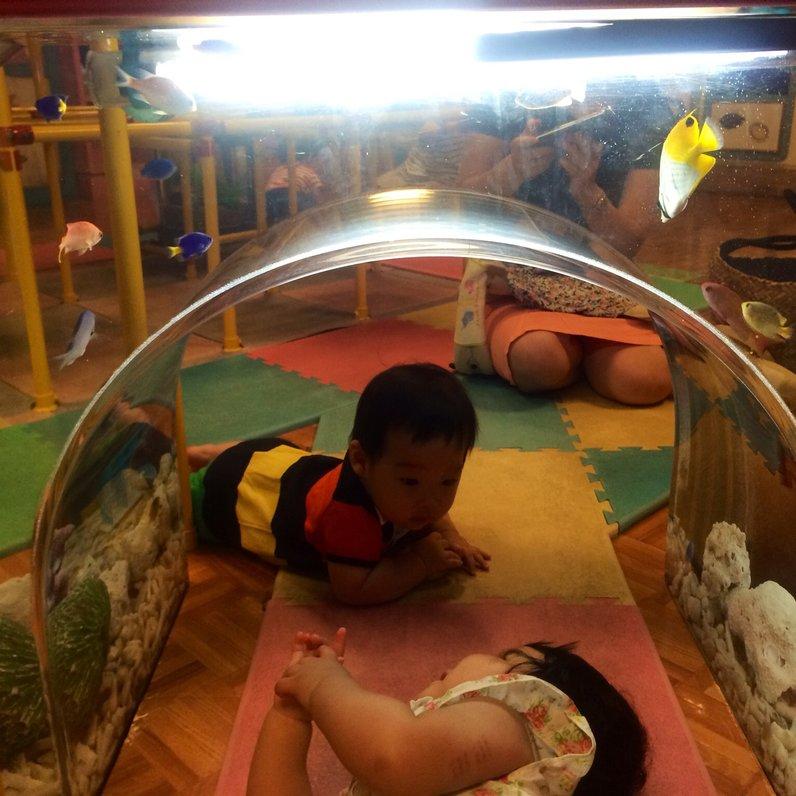 ヨコハマおもしろ水族館 よしもと赤ちゃん水族館
