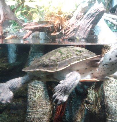 サンシャイン水族館 (Sunshine Aquarium)