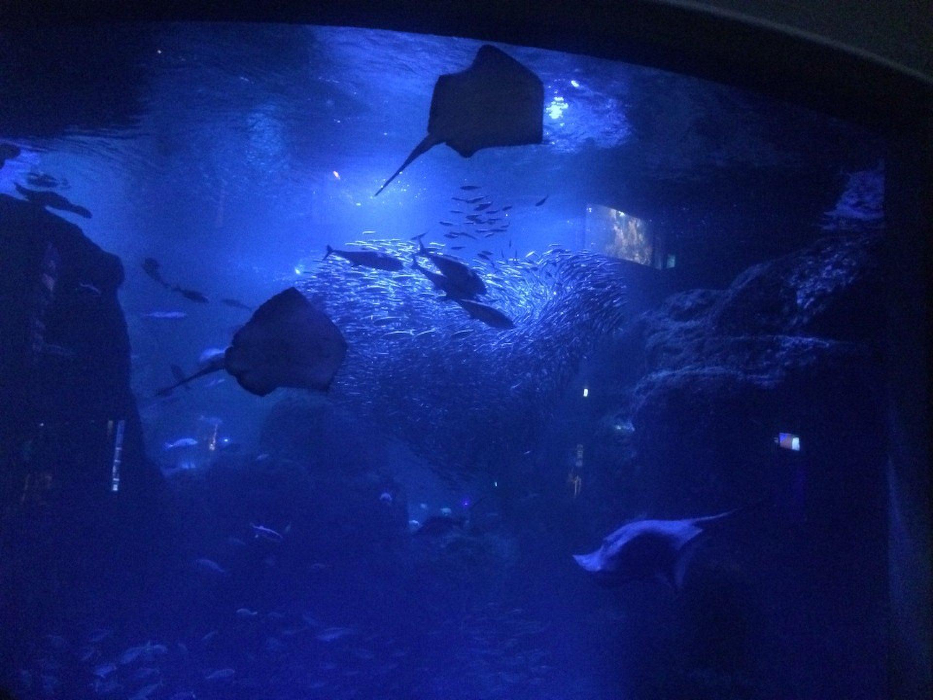 夕方からの江ノ島おすすめデートプラン!『新江ノ島水族館』のナイトアクアリウムへ!