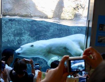 北海道2泊3日旅で2日目に初めて旭川を巡るなら☆デートや写真旅行に♪動物園/上野ファーム/ラーメン