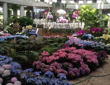 【宮崎で一番天国に近い場所】デートにも観光にもお花畑はうってつけ!