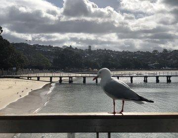 シドニーおすすめ観光地でランチ♡絶景・穴場バルモラルビーチ