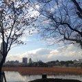 上野恩賜公園 (Ueno-Onshi Park)