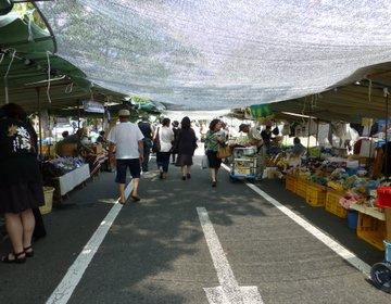 高知の街路市は日本一の規模!【日曜市】で食べ歩き!