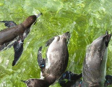 日本海側最大の水族館・マリンピア日本海(新潟)を女子目線で徹底レポ!デートにおすすめ