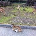富士サファリパーク Fuji Safari Park
