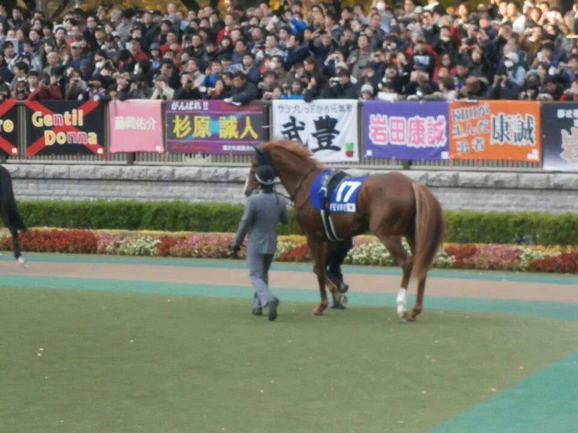 名馬を見に東京競馬場へ行こう!レースが終わった後は新宿思い出横丁の若月へ!