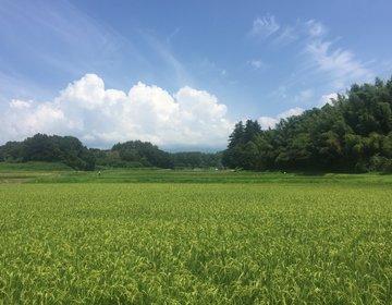 夏に行きたい!【避暑地・八ヶ岳】の楽しみ方!無料の食べ放題アイスてなんだ?