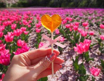 可愛いチューリップ・芝桜はフォトジェニック【群馬・館林・茂林寺・トレジャーガーデン】