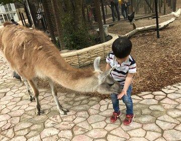 【千葉・市原】動物好きにはたまらない♡大人も子供も楽しめるサユリワールド