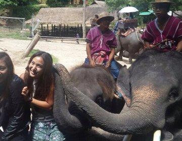 【タイで動物に触れ合いたい女子におすすめ】タイ好きが教える象、虎、蛇と遊べるスポット3選