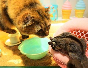 堀江デートにおすすめ!夢かわいい空間で動物たちと触れ合える室内動物園が今キテる!