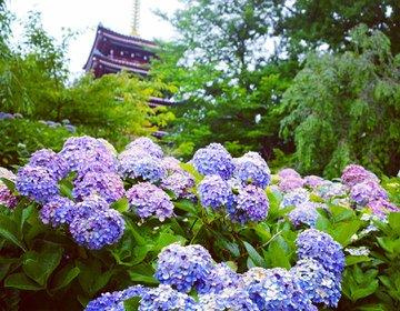 アジサイに埋もれた写真が撮れる!穴場の「本土寺」とふわっふわで大人気のカキ氷「三日月氷菓店」【千葉】