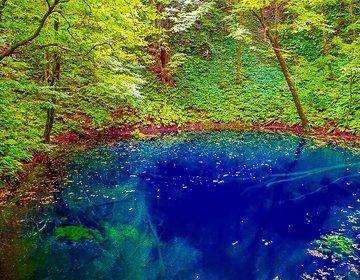 実は白神山地に青い池は2つあった?千畳敷・不老ふ死温泉も行く青森県日本海側を巡る休日ドライブ