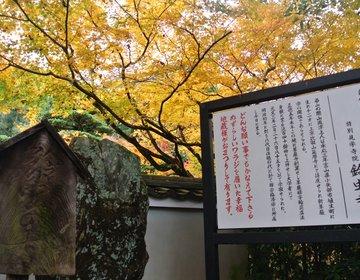 日本でここだけ!一年中鈴虫が鳴いている京都のお寺【鈴虫寺】とは?