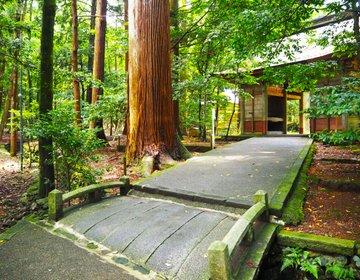 【若狭彦神社】森の中の神聖な世界。福井県小浜市のパワースポット!