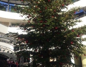 横浜のクリスマスツリー巡りプラン♡