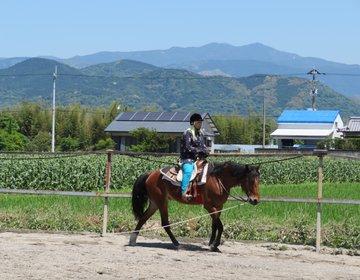 高知県南国市観光♪南国ホースパークで乗馬体験をして、轟の滝を見に行くプラン!