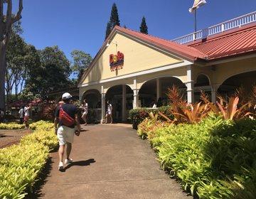 ハワイ旅行 子連れにおすすめ!アメリカ1大きな迷路がある大人気テーマパークスポットドール農園
