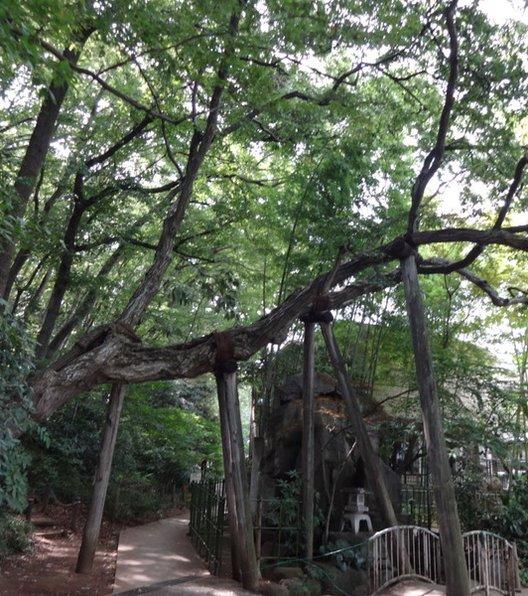 板橋区立 赤塚溜池公園