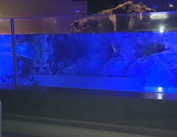 平日仕事帰りに空いてて快適スカイツリー&すみだ水族館をプレイライフクーポンの光るドリンクとともに