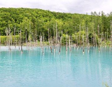 道民おすすめの外さない美瑛&富良野ドライブ☆青い池と美瑛の風景&ランチ・スイーツを堪能しよう♪