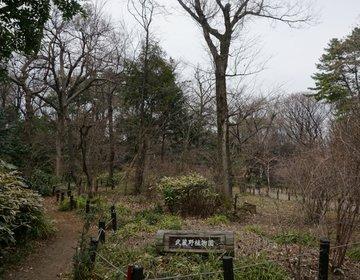 【都会の大自然】正直、冬にはオススメ出来ない!枯葉散る目黒自然教育園