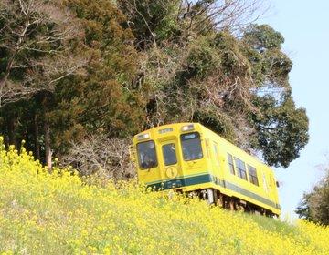 【千葉・いすみ市】春の行楽シーズン!いすみ鉄道国吉駅!ムーミン列車と菜の花のコラボ。