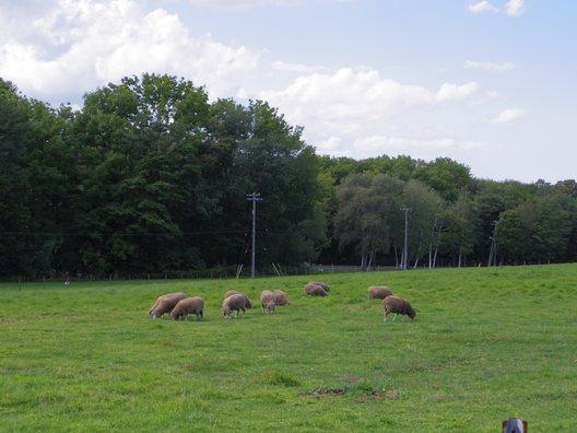 さっぽろ羊ヶ丘展望台