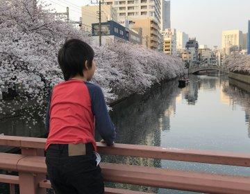 急いで!満開の桜を見ながら癒されよう☆親子でも楽しめる日帰りプラン☆横浜*関内*桜木町*日ノ出町