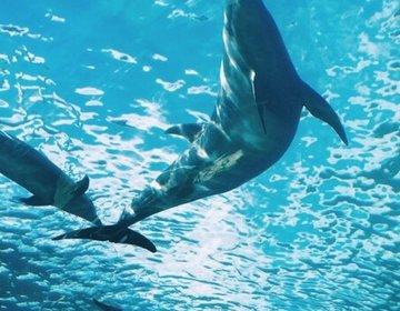 【八景島・水族館・シロイルカにタッチ!】週末は八景島シーパラダイスで海の世界に触れよう!