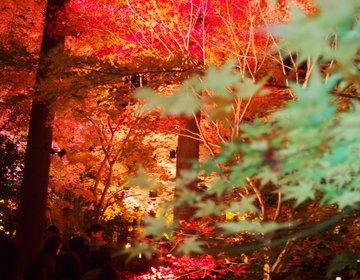 幻想的な世界!松島・円通院の紅葉ライトアップ【宮城】