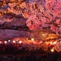 【2017年版】春にカップルでいきたい!東京都内にあるお花見スポット10選!
