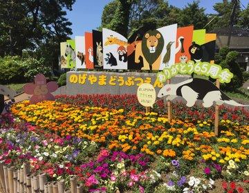 白いクジャクを見に行こう!入場料はなんと無料の野毛山動物園!!